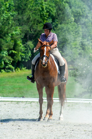 Bridle 15 Beth Bass And Rembrandt