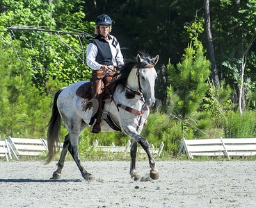 Bridle 11 Laura Miller And Rayo