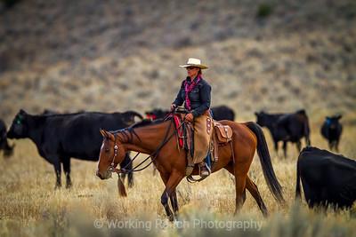 2015 Z Bar T Ranch - Dell, Montana
