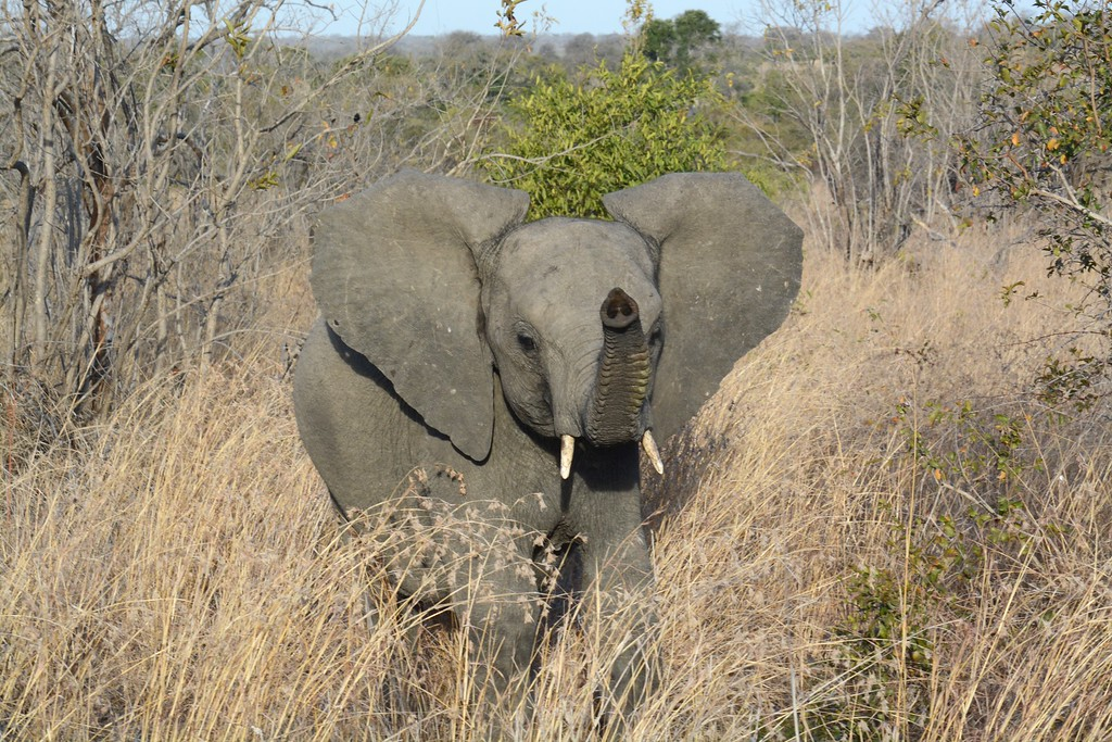 2015 Aug Sabi Sands Safari 4 & Panorama Route
