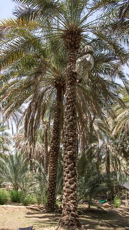 Abu Dhabi-1161