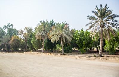 Abu Dhabi-1065