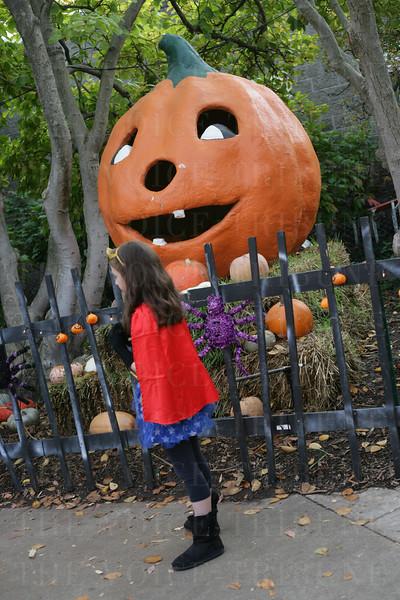 2015 Louisville Zoo Halloween Party