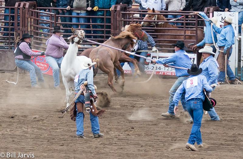 Saddle 'em!