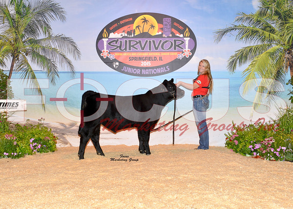 Chianina Steer Show