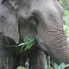 Thailand 2015, Wildlife, Elephant