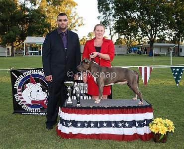 American Staffordshire Terrier Club Qld Championship Show
