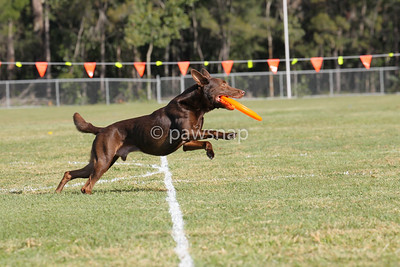 Disc Qld State Championships