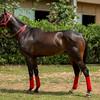 HORSES08