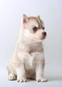 Huskies-LightRedbitch01