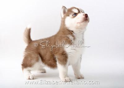 Huskies-DrkRedbitch12
