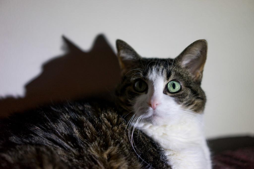 3/2 - Shadow Cat