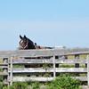 Horse and saddle behind fence