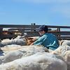Boy among calves in corral