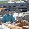 Boy among the calves in corral