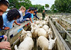 2015 Ambury Farm Export--6.jpg