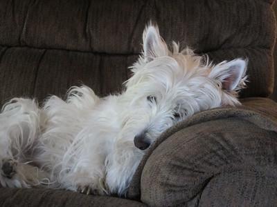 2015 Dog Photos JSW