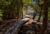 Jordan Pond Shore Trail