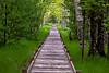 Jesup Path