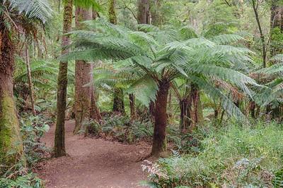 Palm Tree-Ferns