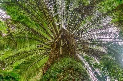 Palm Tree-Fern from Below