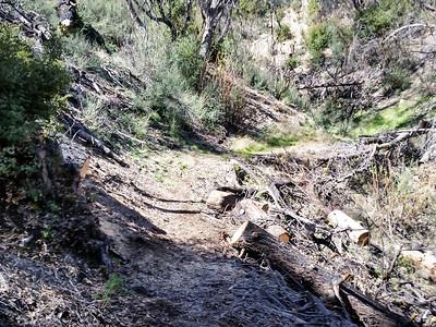 20150307014-Silver Mocassin Chainsaw Trailwork