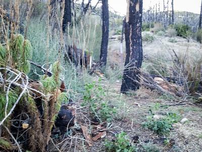 20150307026-Silver Mocassin Chainsaw Trailwork