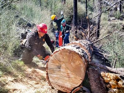 20150307011-Silver Mocassin Chainsaw Trailwork