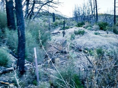 20150307027-Silver Mocassin Chainsaw Trailwork