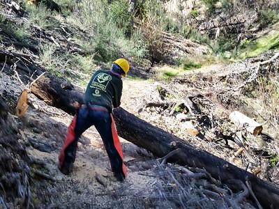 20150307012-Silver Mocassin Chainsaw Trailwork