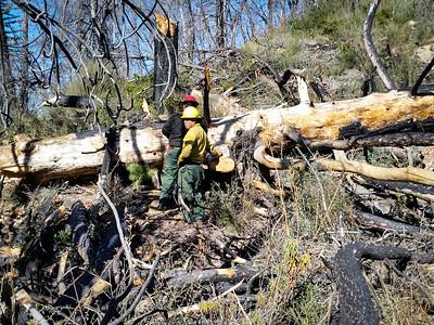 20150307020-Silver Mocassin Chainsaw Trailwork
