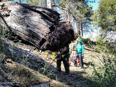 20150307015-Silver Mocassin Chainsaw Trailwork