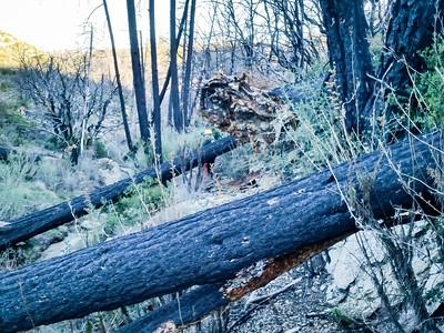 20150307025-Silver Mocassin Chainsaw Trailwork
