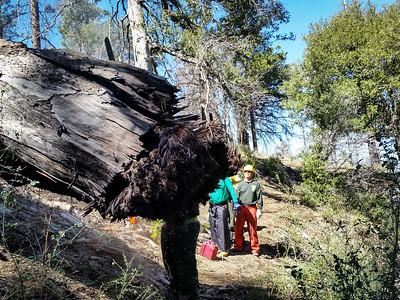 20150307016-Silver Mocassin Chainsaw Trailwork