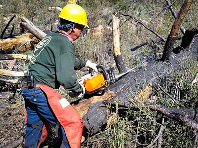 20150307023-Silver Mocassin Chainsaw Trailwork