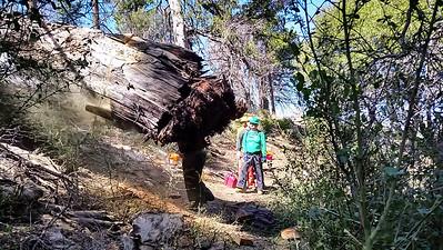 20150308033-Silver Mocassin Chainsaw Trailwork