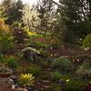 Garden Rain