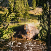 Gibbon River, Yellowstone NP, WY