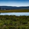 Hayden Valley, Yellowstone NP, WY