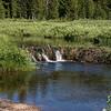 Beaver Ponds, Yellowstone NP, WY
