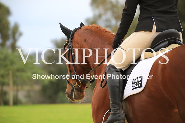 Christmas in July Dressage
