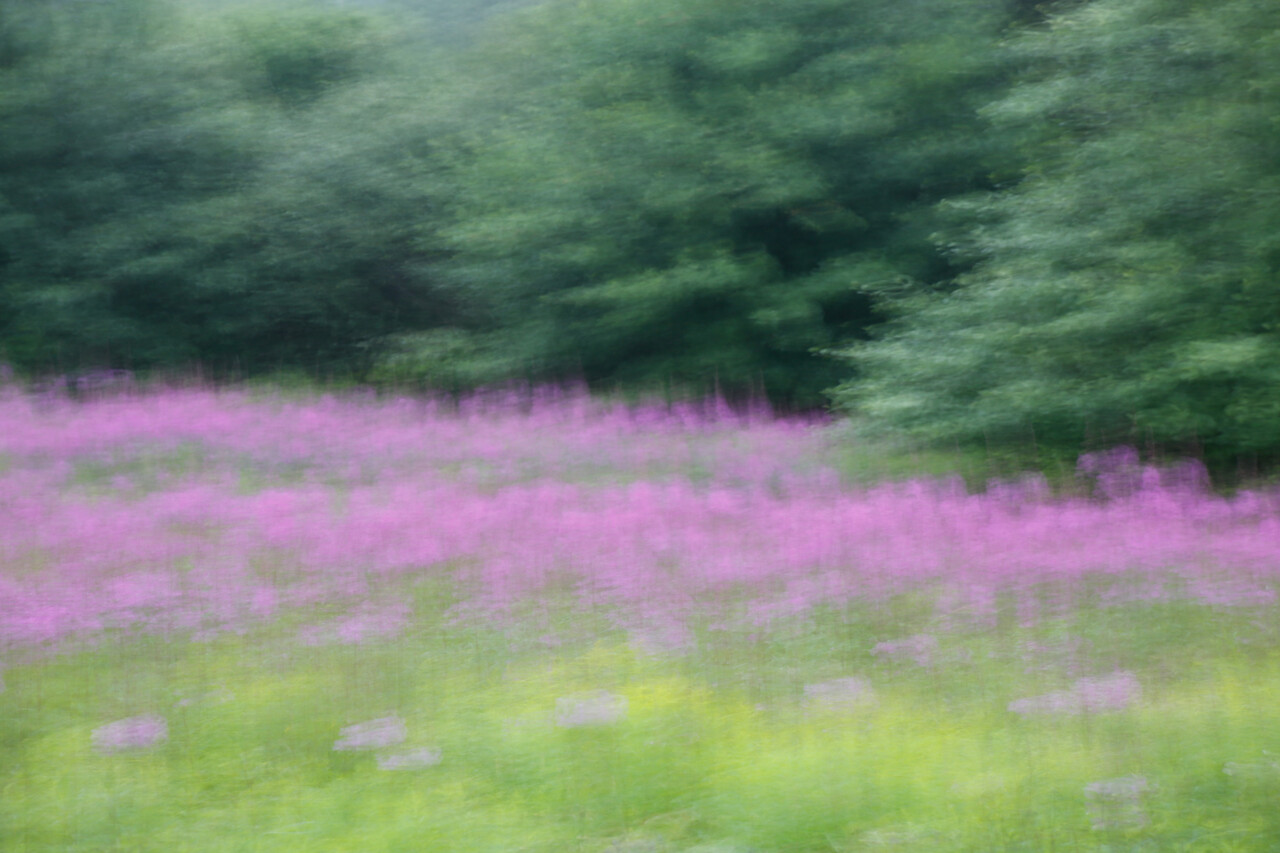 Meadow breeze
