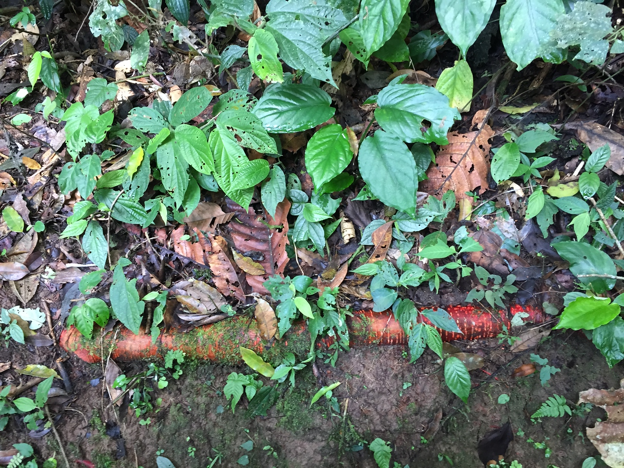 jungle floor with red roots