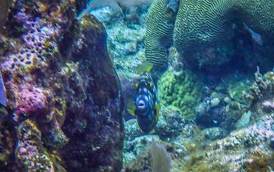 Underwater Roatan-82