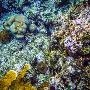 Underwater Roatan-69