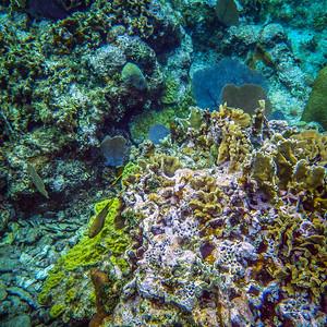 Underwater Roatan-74