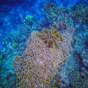 Underwater Roatan-61