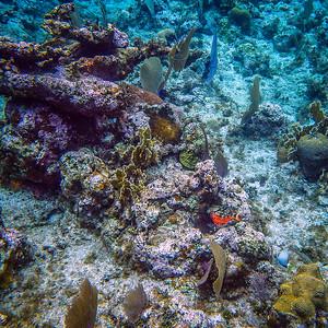 Underwater Roatan-85