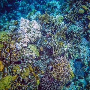 Underwater Roatan-56