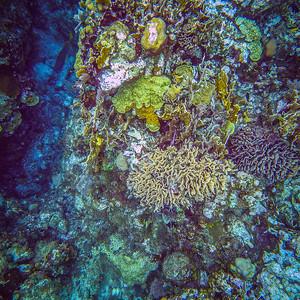 Underwater Roatan-0316